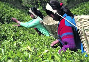 चियाबाट विदेशी मुद्रा आर्जन