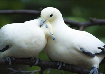 पक्षीको प्रेम :चरी पनि ब्वाईफ्रेन्ड फेर्छन्